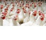 Составляем бизнес-план птицефабрики