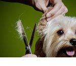 Как открыть салон для собак