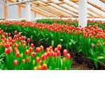 Выращивание цветов в теплице как бизнес. Бизнес-план.