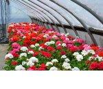 Бизнес-план по выращиванию цветов в теплице