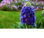 Топ-3 садовые растения для продажи через Интернет