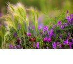 Колокольчики мои: можно ли построить бизнес на полевых цветах