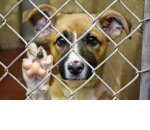 Как открыть приют для животных: пошаговое руководство. Открытие приюта для бездомных животных при поддержке государства