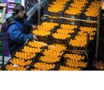 Российские власти не планируют отменять продуктовое эмбарго