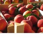 Роспотребнадзор хочет запретить уничтожать пригодные к употреблению продукты