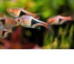 Как заработать на продаже и разведении аквариумных рыбок