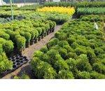 Как открыть садовый центр