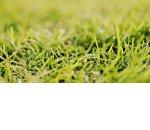 За мусор и нескошенную траву могут изъять участок