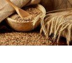 Урожай зерна в России по прогнозам снизится на 20%. Как это повлияет на цены?