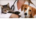 Как открыть ветеринарную клинику и гостиницу для животных в селе