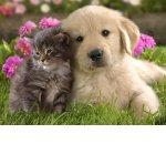 Для братьев меньших: на любви к животным можно зарабатывать и в кризис
