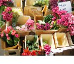 Многопрофильный магазин цветов – красивая победа над конкурентами (бизнес-план)