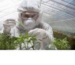 В России полностью запрещается ГМО в АПК
