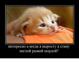 Пользователь Павел Романов [uid:85592]