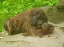 зоопарк<br />                           (Фото: Зыгарь Ирина)