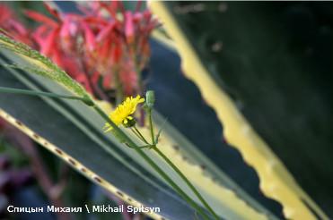 Тунис,Южный Хаммамет<br /> весенний желтый цветок
