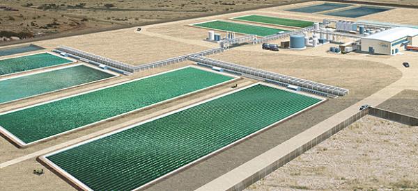 Так должен выглядеть завод в Хоббсе (Нью-Мексико). Чтобы избежать больших расходов на подогревание труб с микроорганизмами, такие производства лучше размещать в зонах относительно тёплого климата. (Иллюстрация Joule Unlimited.)