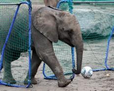 Как чиновники просили у меня деньги на слона