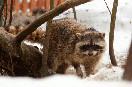 Владелица Гелиос отеля Тамара Брусокене открыла зоопарк на 55 клеток.<br />                           (Фото: Иванов Евгений)