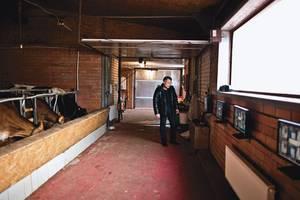 Зачем корове телевизор Сельская жизнь,Экология,Эффективное производство,Россия