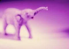 """www.pmoney.ru: """"Купи слона"""" или как сделать бизнес-проект успешным"""